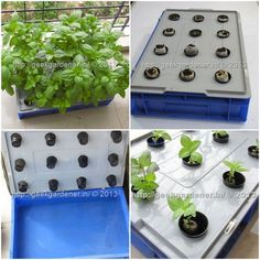 How To Grow Herbs In A Hydroponic Raft System | A great way to use old plastic tubs is to make a hydroponic garden.