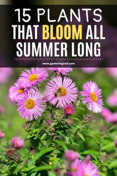 15 Plants That Bloom All Summer Long Butterfly Garden Plants, Flower Garden Plans, Garden Yard Ideas, Lawn And Garden, Hydrangea Garden, Full Sun Flowers, Shade Flowers, Summer Flowers, Tiny Flowers