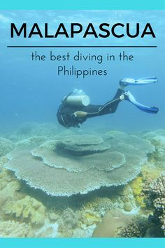 Diving in Malapascua and other things to do in Malapascua, Philippines - come and explore the Philippines most beautiful island!