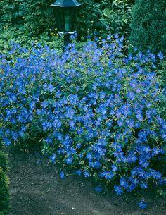 Loistokurjenpolvi - Viherpeukalot Plants, Garden, Geraniums, Perennials, Shrubs, Flowers, Geranium Himalayense, Garden Plants, Blue Flowers