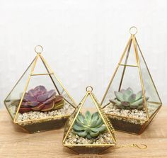 These succulents in diamond holders. | 27 Soothing Terrariums To Bring Tranquility To Your Home