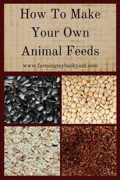 How To Make Your Own Animal Feeds - Farming My Backyard You can make your own animal feeds for your goats, rabbits, or chickens! You can also supplement your purchased feeds for more nutrition! Raising Farm Animals, Raising Goats, Raising Chickens, Baby Chickens, Urban Chickens, Backyard Farming, Chickens Backyard, Backyard Landscaping, Pig Feed