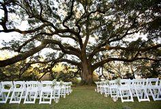 Married under the old oak tree!