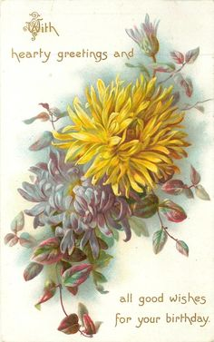 Chrysanthemums in purple and yellow, birthday message, 1908.