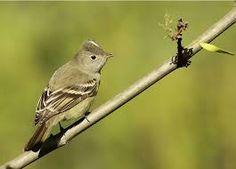 「aves zona precordillerana chile」的圖片搜尋結果