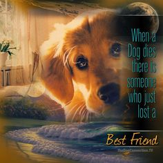 When a dog dies, there is someone who just lost a Best Friend.