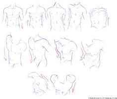 male torsos.