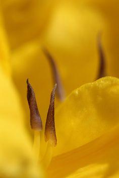 Yellow Flowers by cheryl.rose83 - Cheryl Rose on Flickr