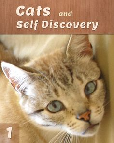 Find out How and Why One's Relationship to Cats is a Key to Self Awareness. Feelings And Emotions, Thoughts And Feelings, Why Do Cats Purr, Life Review, First Relationship, Cats Musical, Animal Projects, Self Discovery, Pet Care