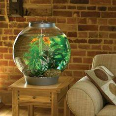 Les 25 meilleures id es de la cat gorie aquarium rond sur for Petit aquarium rond