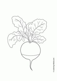 Radish Vegetables Coloring Pages For Kids Printable Free