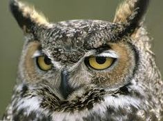 imagenes de aves - Buscar con Google