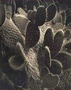 Harold Cazneaux Nature's Armature 1930-39