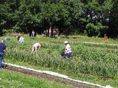 Michigan State proposes 100-acre, $100-million urban-farming research center in Detroit