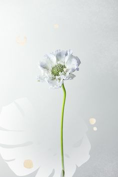 Scabiosa     7 of the Season's Trendiest Flowers That Will Be in All the Bouquets via @MyDomaine