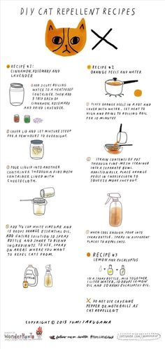 DIY Cat Repellent Spray: 3 All-Natural Recipes That Are Safe for Indoor & Outdoor Cats, via The Secret Yumiverse