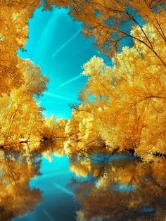 Magnificent Trees around the World !! Part 2 -Yellow trees over Water.