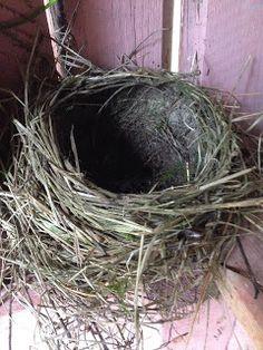 Luonnon arkkitehtuuria parhaimmillaan, linnunpesä savesta ja ruohonkorsista. Perfectly made bird's nest. Grapevine Wreath, Grape Vines, About Me Blog, Eggs, Wreaths, Garden, Decor, Decoration, Decorating