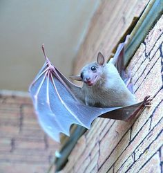 Even bats get tired of one's shit and feel the need to flip the bird sometimes...