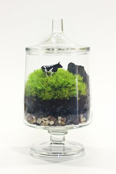 I'm having memories of our Scotland & Ireland trips with this terrarium.  Would be nice for talking about environments with Little Bird.