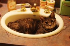 Sink Cat | Copyright 2014 Hannah Zimmers