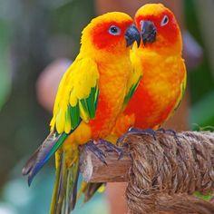 ideas for colorful bird tropical Colorful Animals, Colorful Birds, Tropical Birds, Exotic Birds, Cute Birds, Pretty Birds, Beautiful Creatures, Animals Beautiful, Most Beautiful Birds