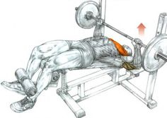Learn how to perform the decline barbell bench press to target the lower part of your chest (pectoral) muscles. Find the best decline barbell bench press substitutes. Lower Chest Workout, Chest Workouts, Gym Workouts, Gym Plan For Women, Quad Exercises, Chest Exercises, Bench Press Weights, Gym Workout Chart, Workout Plans