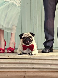 8 tips para tener una boda pet friendly