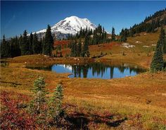 Tipsoo Lake-Naches Peak Loop.  Must Do!!!