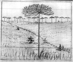 John Muir journal sketch, November 21, 1911 Notebook Sketches, Field Notes, John Muir, Nature Journal, Field Guide, Altered Books, Book Pages, Art Sketchbook, Line Art