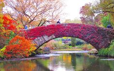 Picture-Perfect Fall Foliage #FallforNewYork