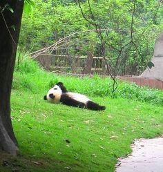 China : お昼寝パンダ | Sumally (サマリー)