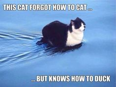 Cats can swim, but might need help learning to get out. Especially if tired. Maybe something for 3D Printer Chat?