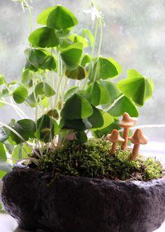 Leprechaun garden | st patricks day