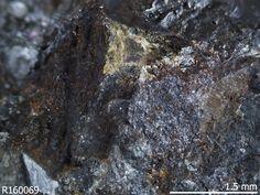 Bobfergusonite,  Na2Mn++5Fe+++Al(PO4)6, Nancy Pegmatite, Chacabuco Dept, San Luis, Argentina. Source: Thomas A. Loomis. Dark brown massive, associated with dark green dicksonite