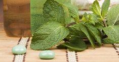Maravilhoso xampu de hortelã e erva-cidreira: elimina a caspa e faz o cabelo crescer mais rápido | Cura pela Natureza