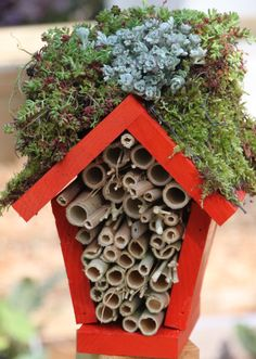 Make a Lady Bug Hotel...not convinced lady bugs would live there BUT it sure is cute and kids would love the idea of making a lady bug home:)