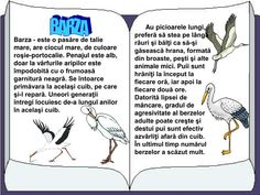 PPT - PĂSĂRI CĂLĂTOARE PowerPoint Presentation - ID:2919381 Romanian Language, Kindergarten Activities, After School, Presentation, Childhood, Memes, Biology, Pre K, Infancy