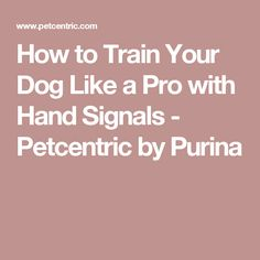 How to Train Your Dog Like a Pro with Hand Signals - Petcentric by Purina