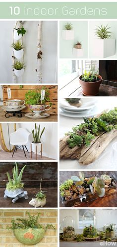 Whether you live in an apartment, tiny home, small space or large home, indoor gardens are doable and add so much to your living space! These 10 indoor garden ideas can fit in any space. Hanging planters, succulents in driftwood for a coffee table topper and plant stands for potted beauties, tons of great DIYs here: http://www.ehow.com/list_12340231_7-diy-indoor-gardens-urban-gardener.html?utm_source=pinterest.com