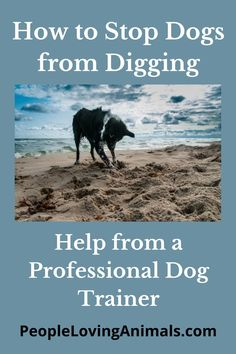 How to Stop Dogs from Digging Stop dog digging, Dog Training