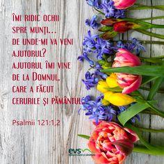 Gândul de dimineață - Editura Viață și Sănătate Minimalist Interior, Floral Wreath, Plants, Verses, Roman, Study, Faith, Bible, Floral Crown