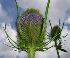 Image result for teasel headdress Willow Wreath, Headdress, Wreaths, Chocolate, Plants, Projects, Image, Log Projects, Blue Prints