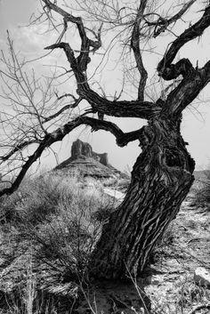 ~~Wicked Tree | mono, Professor Valley, Moab, Utah by Jeff Clow~~