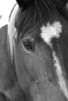 One day I will welcome horses back into my life, I wish they never left *sigh*