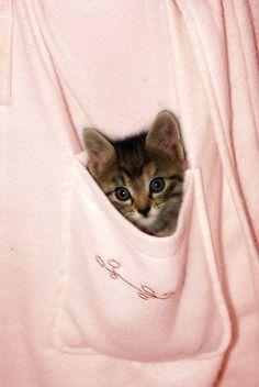 pocket kitty.