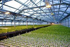 Gotham Greens' climate-controlled greenhouse, on top of a warehouse in Greenpoint, Brooklyn