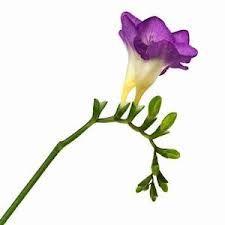 flower splash for my bouquet?