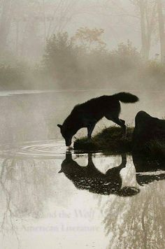 Wolves The reason why wildlife photography is awesome!