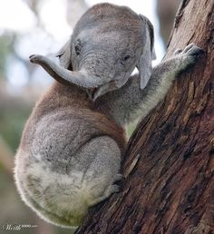 Koalaphant- good example to show for animal merge project